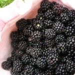 Blackberries for babies