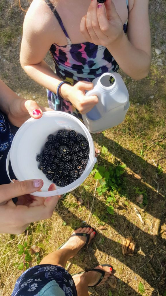 Bibliocook.com - blackberrying August 2019
