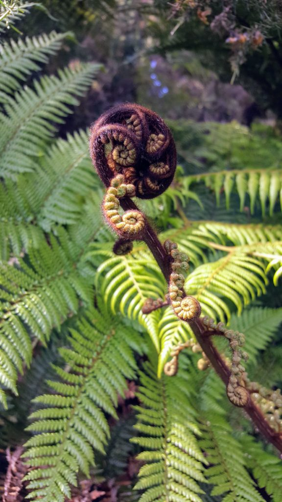 Bibliocook.com - koru fern - New Zealand.