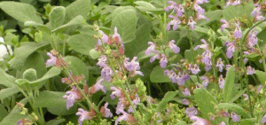 Bibliocook.com - herbs