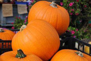 Bibliocook - Irish grown Halloween pumpkins at Mitchelstown market