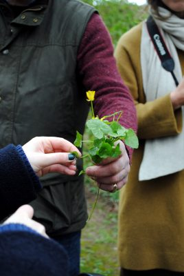 Bibliocook.com - Lens & Larder - food photography - foraging at Ballyvolane House