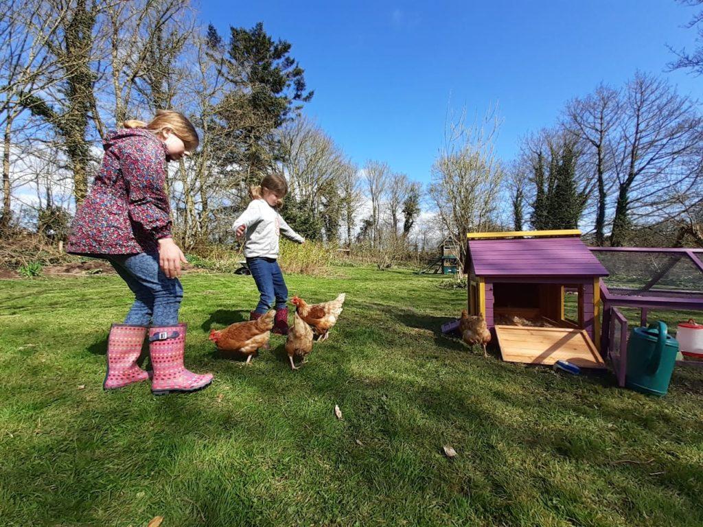 Bibliocook.com - herding hens