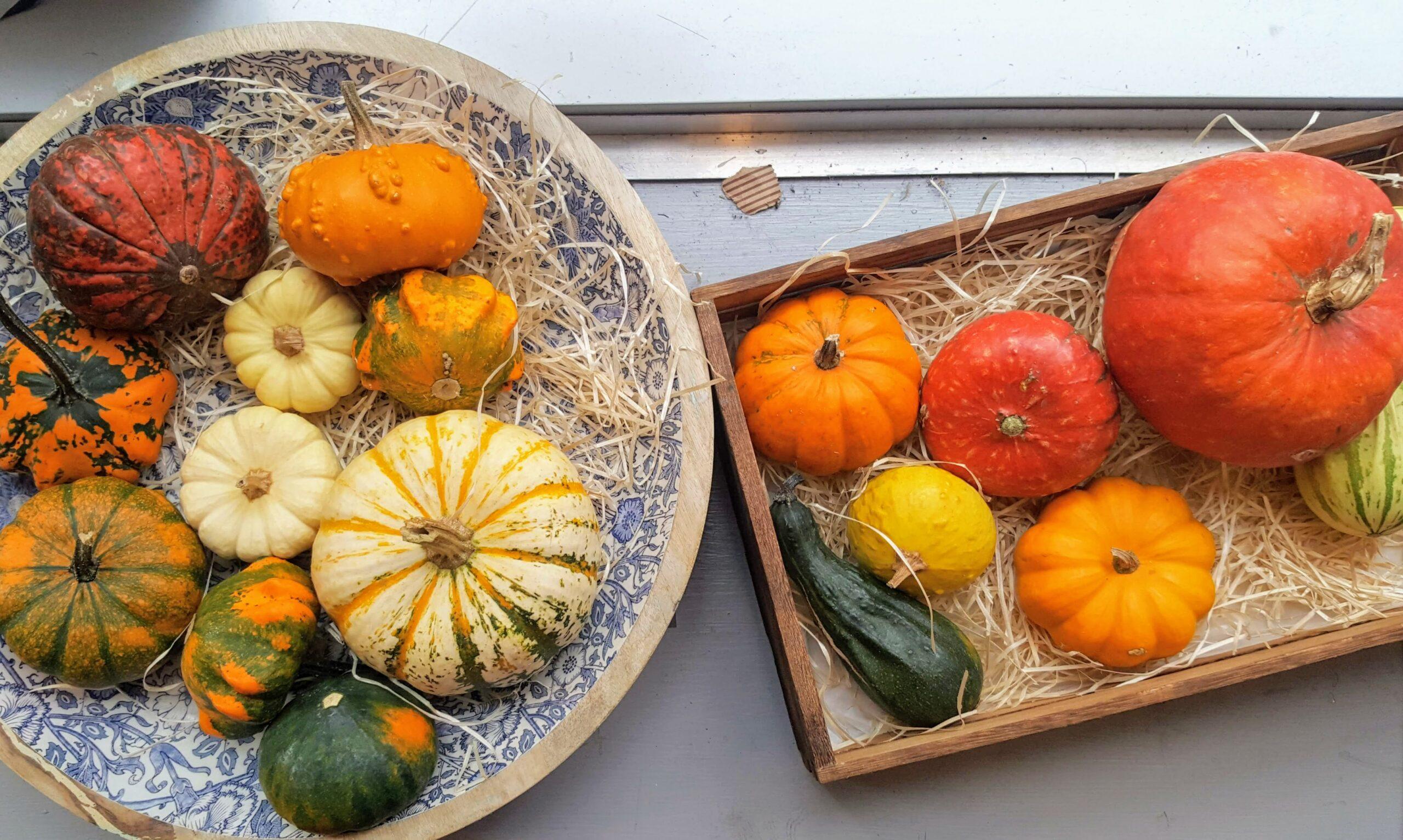 Bibliocook.com - pumpkins
